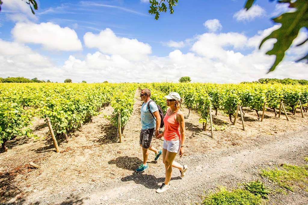 Sur la route des vins vendée