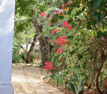 villa ouakamba dakar bougainvilliers